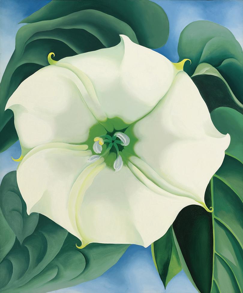 Джорджия О'Кифф. «Цветок дурмана №1», 1929г.