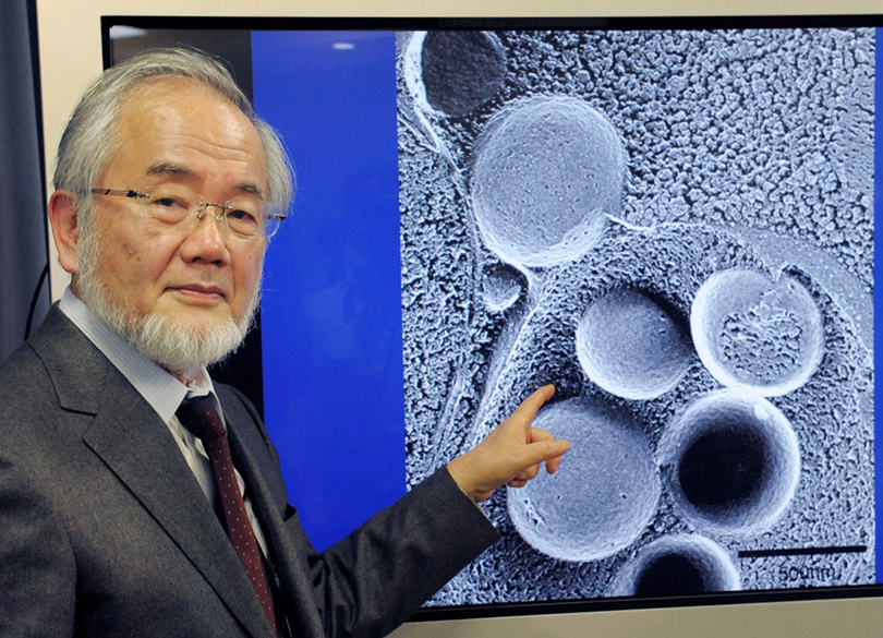Did You Know? Самоедство по-японски: лауреат Нобелевской премии по медицине доказал пользу голодания