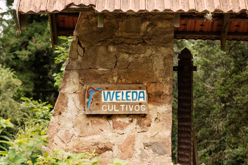 Вчем суть социальных инициатив beauty-брендов: Weleda