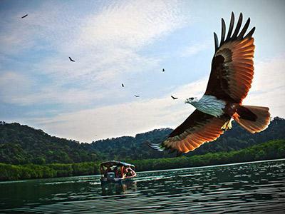 Куда поехать наНовый год: мангровые леса, белки-гиганты икоралловые заповедники Лангкави