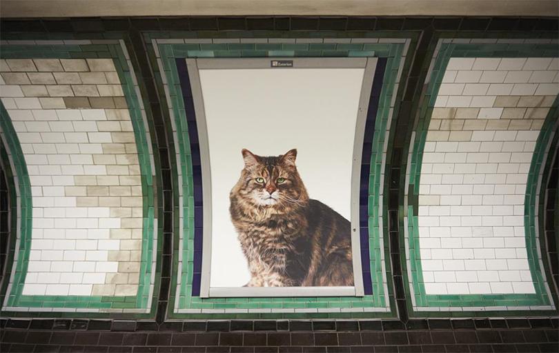 Общество: постеры котиков — вместо рекламы в лондонском метро