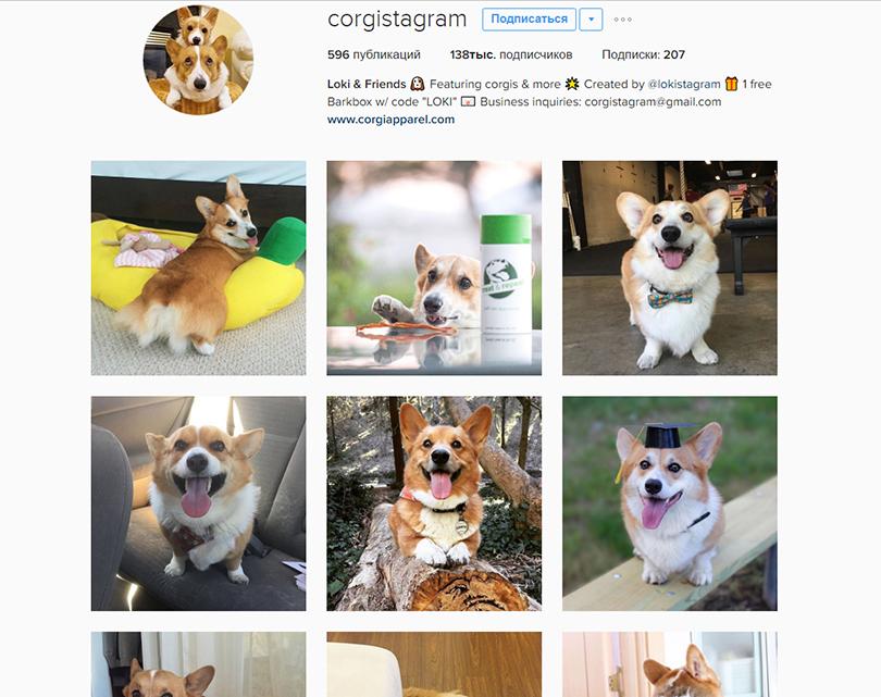 Инстаграм недели: 7 стильных аккаунтов домашних питомцев — для хорошего настроения. Корги Локи, @corgistagram