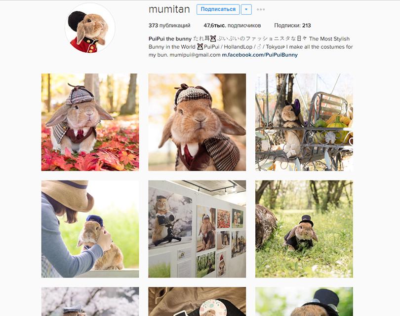 Инстаграм недели: 7 стильных аккаунтов домашних питомцев — для хорошего настроения. Кролик PuiPui, @mumitan