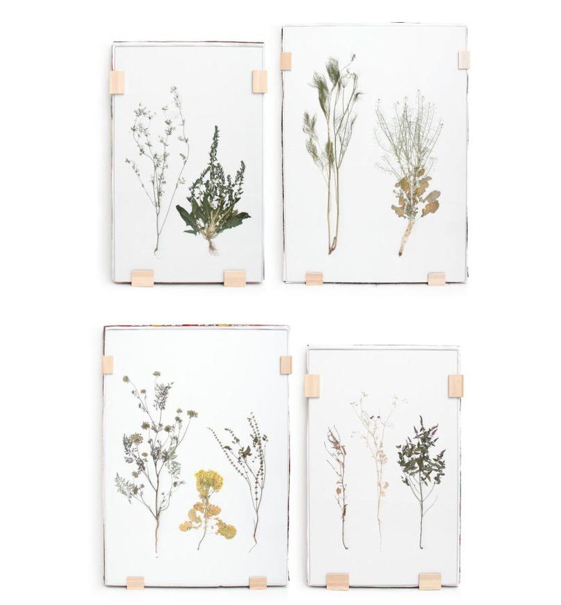 Design &Decor сЕленой Соловьевой: предметный дизайн, илиТы естьто, что тебя окружает. Гербарии отStudio Maarten Kolk &Guus Kusters для Thomas Eyck